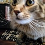 WPS Fur Baby – Ollie